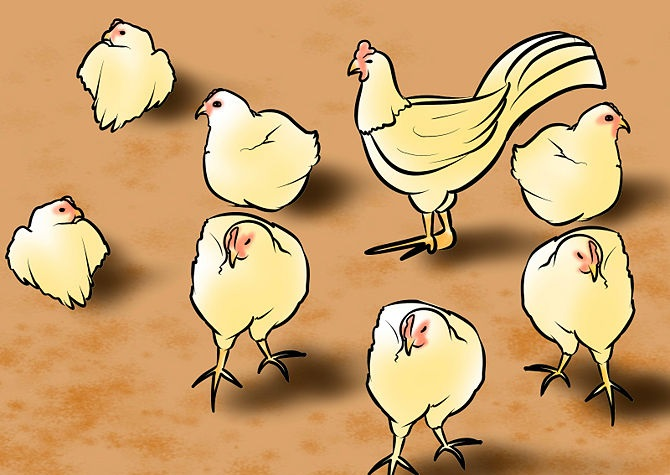 670px-Start-a-Chicken-Farm-Step-4